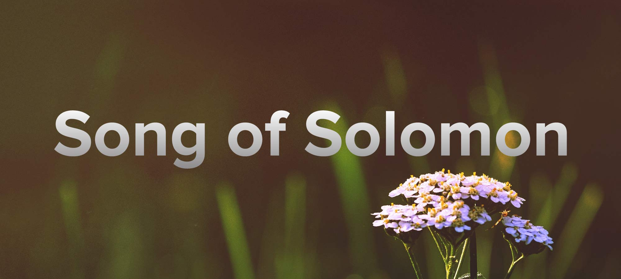 Song-Of-Solomon.jpg